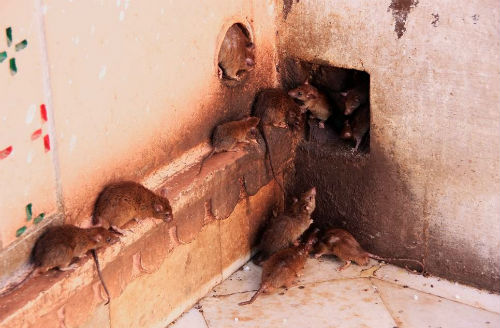 Squirrels in Attic Removal Cost